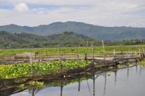 Pemandangan Rowo Jombor